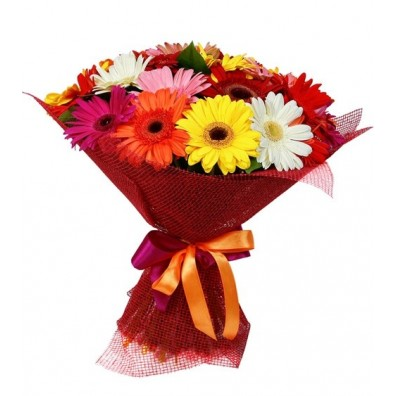 12 Multi Colored Gerberas